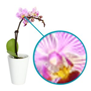 Low quality picture of an orchid